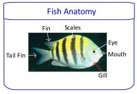 Science for kids – parts of a fish poster