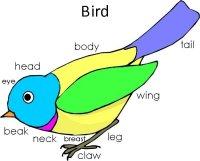 bird theme for preschool