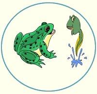 Frog Theme Lesson Plans