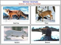 Science for kids – winter animals that adapt