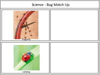 Bug Match Up Game Board