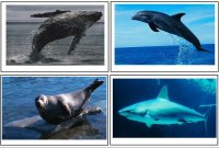 Preschool Science – Ocean Animal Cards