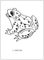 Preschool Frog life cycle book - page 2