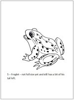 Preschool Frog life cycle book - page 6