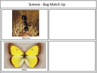 Preschool Science Bug Match Up