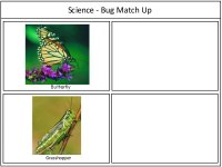 Science For Kids Bug Match Up Activity