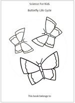 Butterfly Shape Game Shape Activity