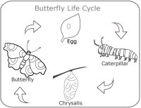 Preschool Science Butterfly Life Cycle