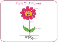 Parts of a flower poster