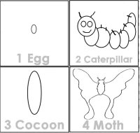 Moth Life Cycle, Science For Kids
