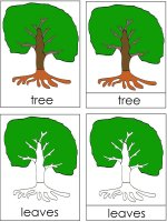 Science for kids – Parts Of A Tree Poster