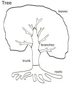 Science for kids – Parts Of A Tree Coloring Page