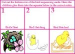 bird sequence cards